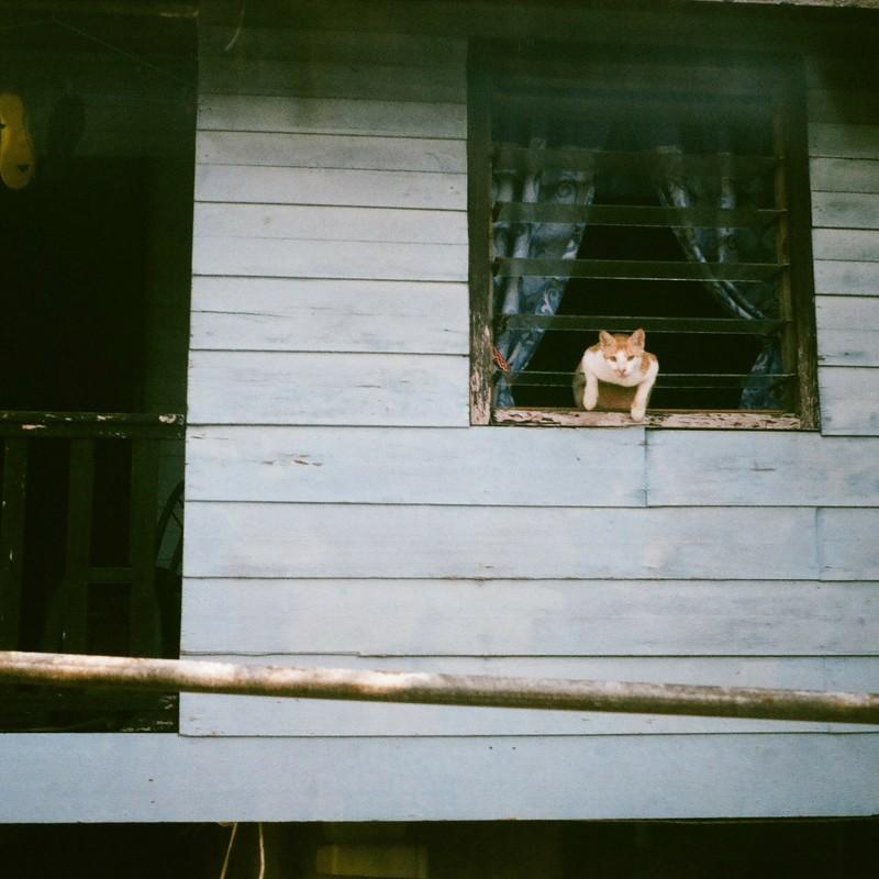 のりだすネコ
