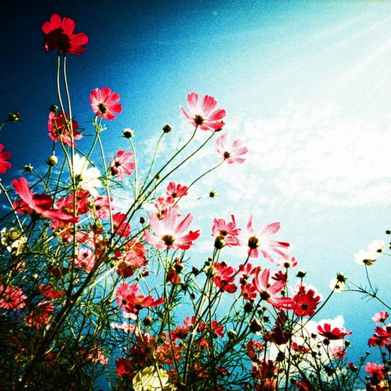 crossing flowers