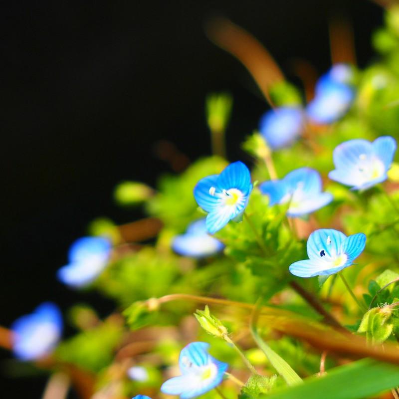 Re : あの見た花の名前を僕たちは普通に知っている