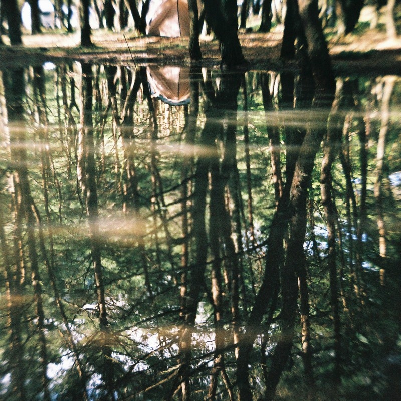 森の中の水の中の森