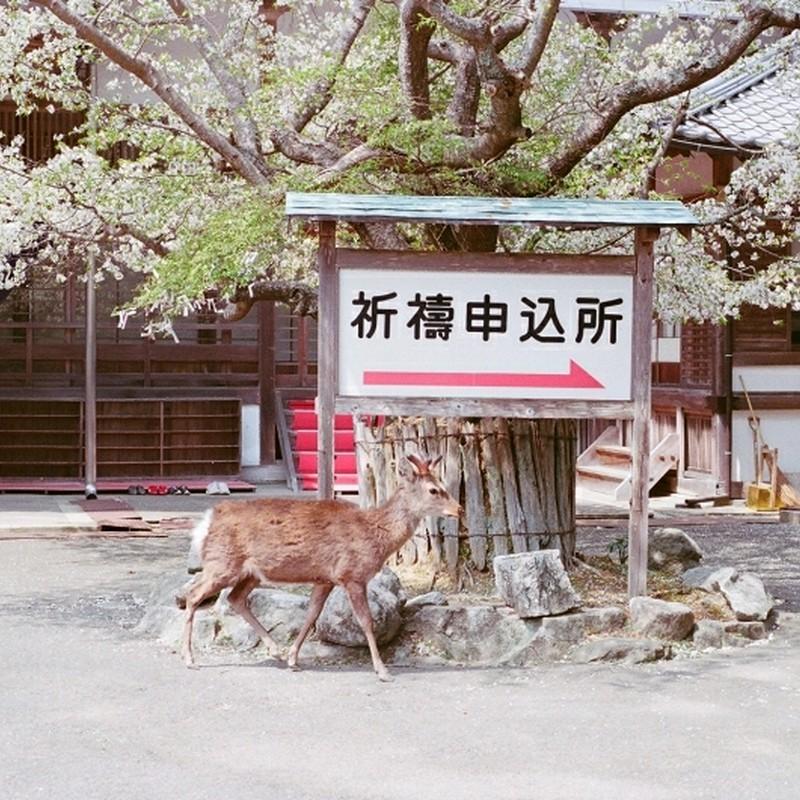 鹿も祈りを
