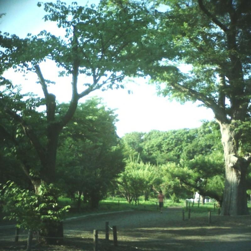 夏の参道3