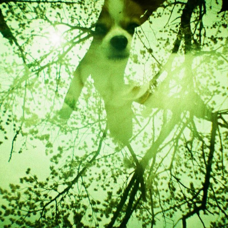杏の木で微笑んで