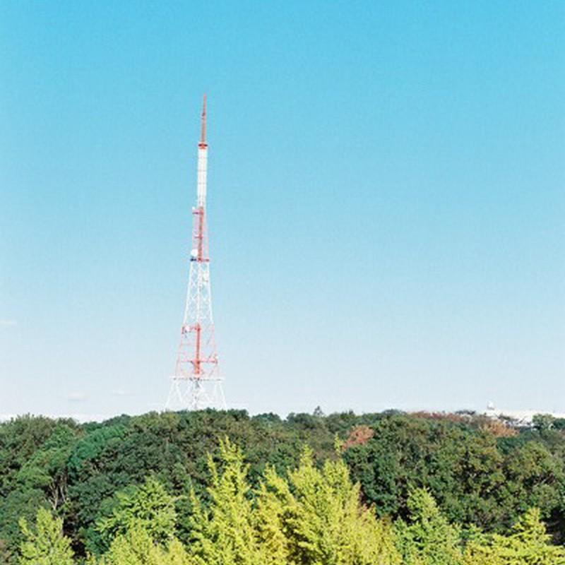 銀杏と鉄塔