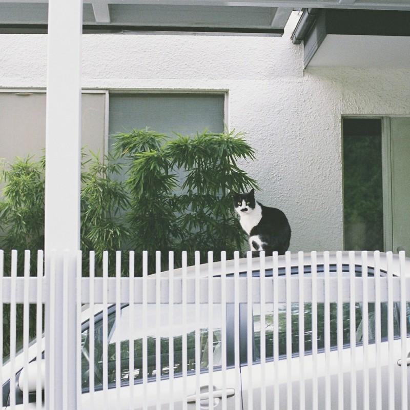 口髭猫男爵