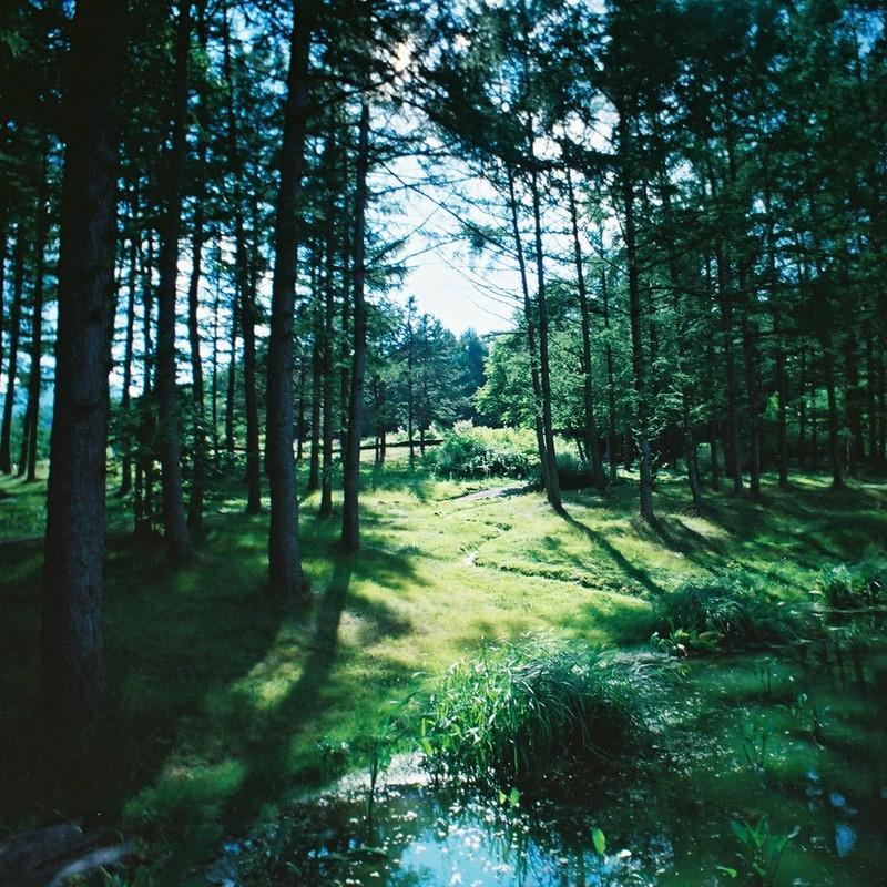 漆黒の樹々