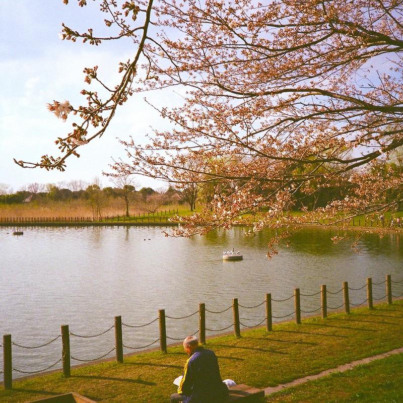 桜ぽかぽか読書