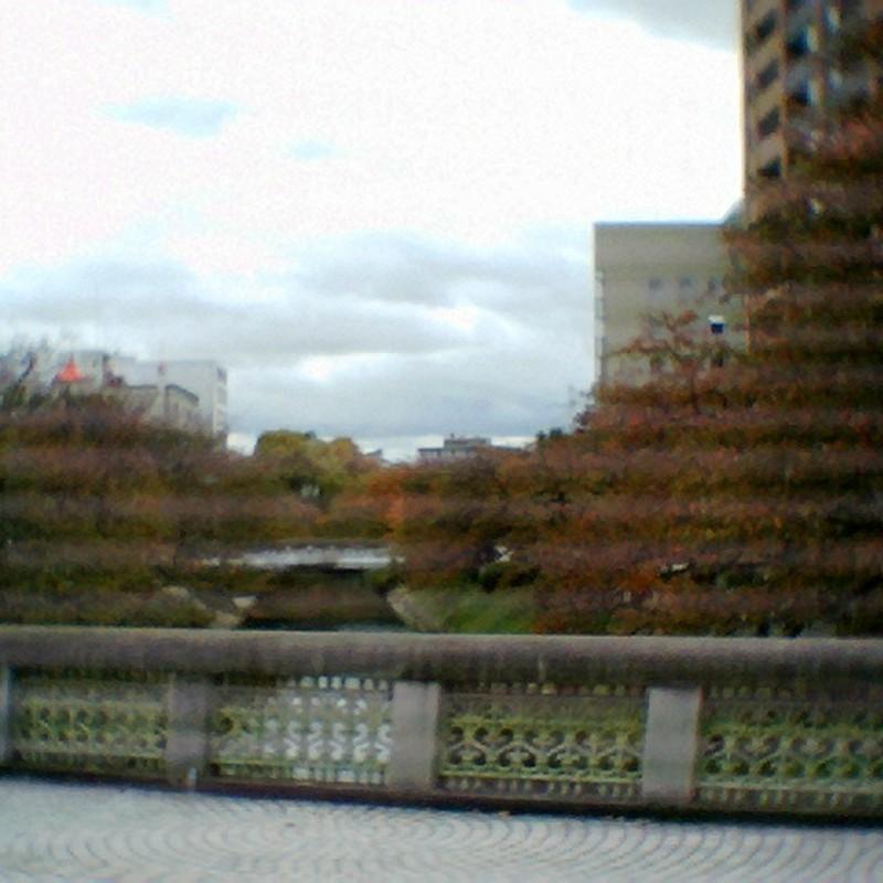 歪む紅葉葉桜。