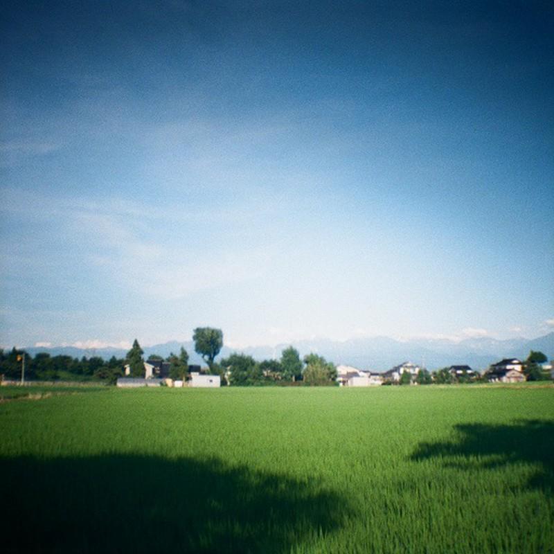 緑の夏~♪