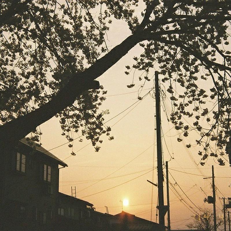 一緒に育った桜の木の下で。