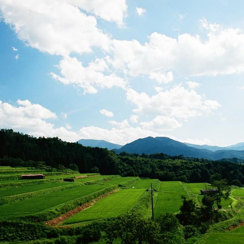 原風景の夏