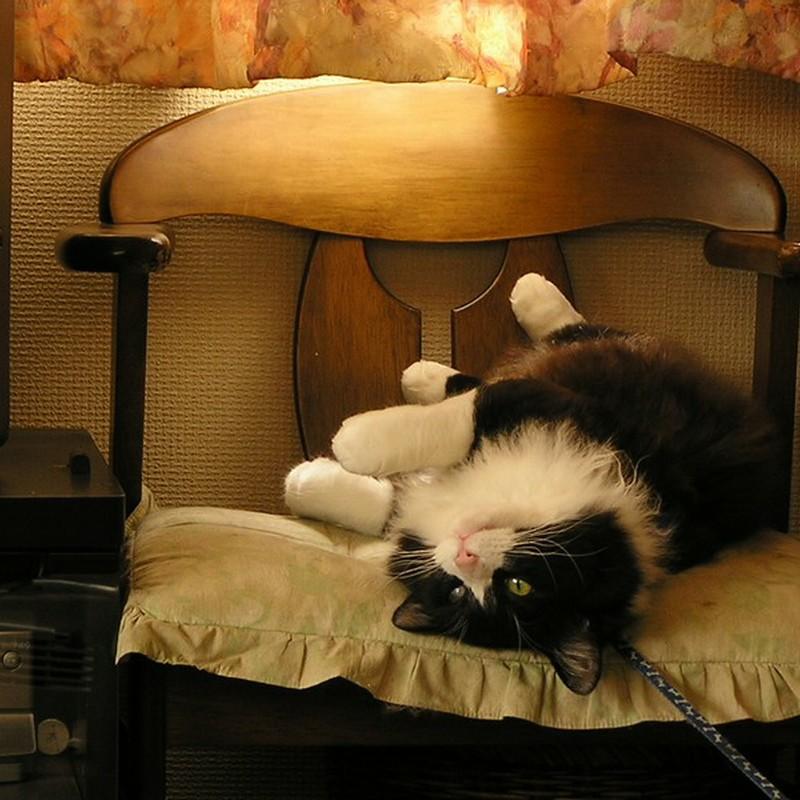 くー太郎という名の猫