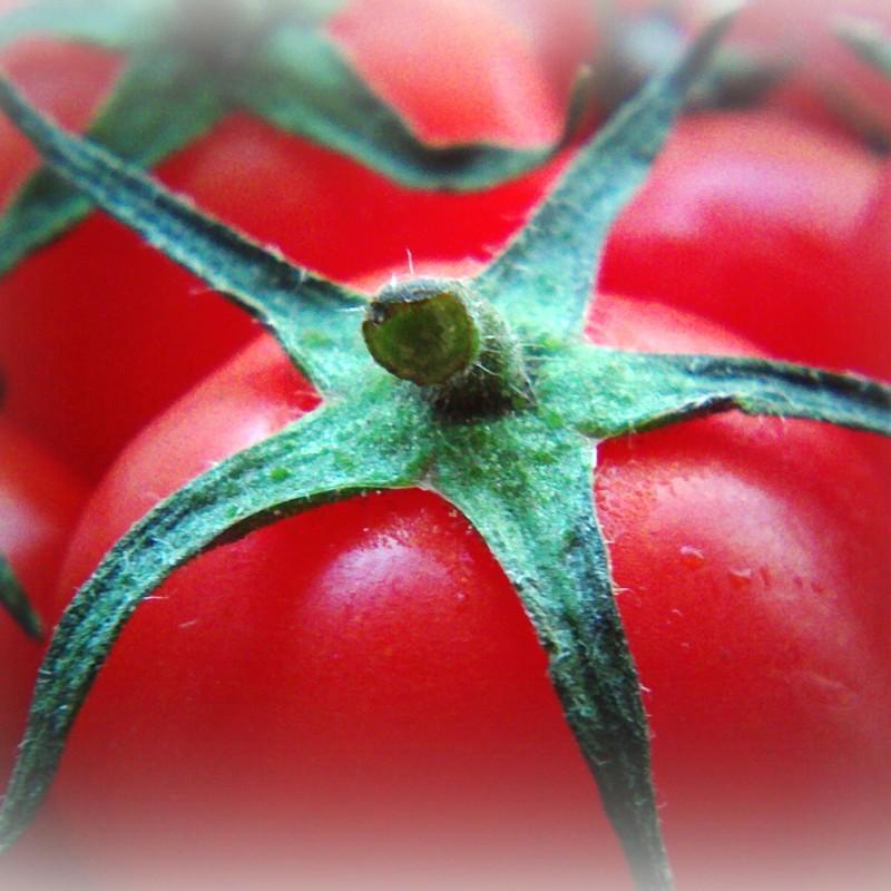 petit tomato