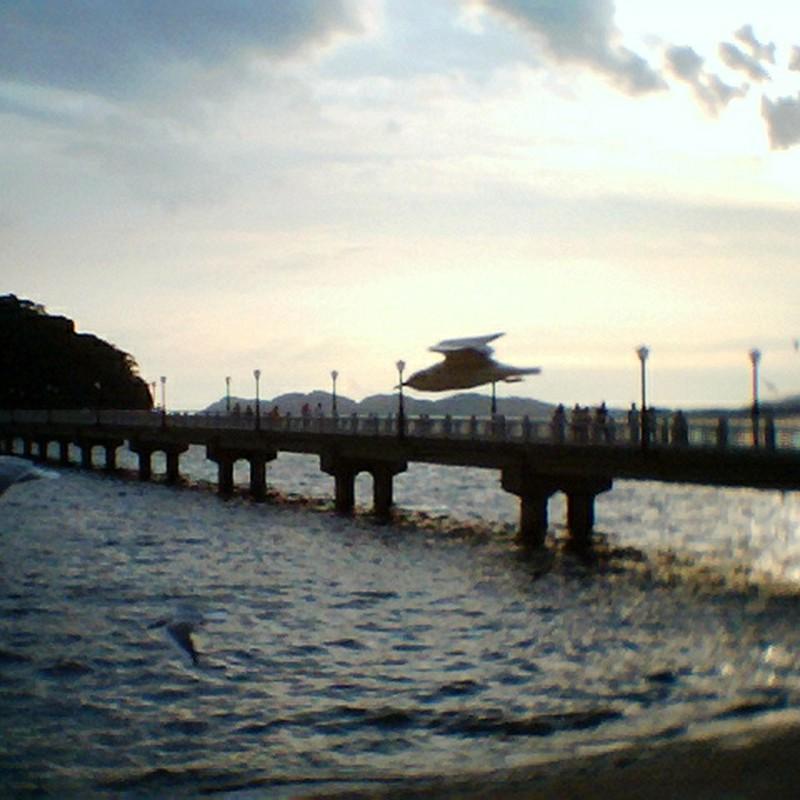 海と鳥と大空と