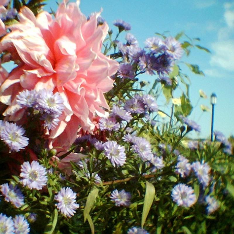光をつかまえた花