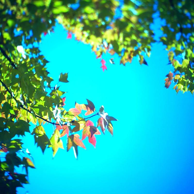 パステルの秋