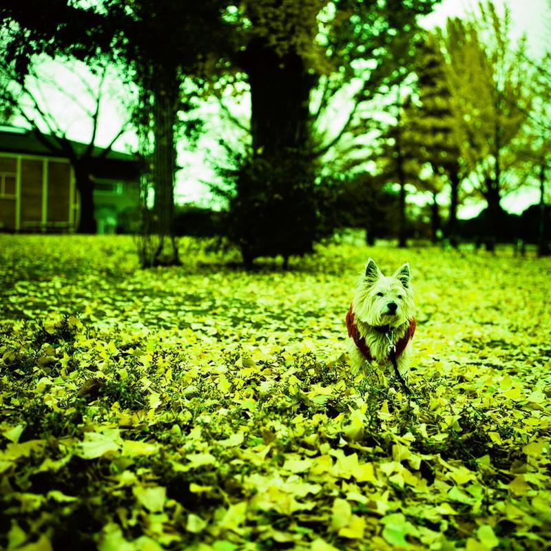 秋のひとコマ