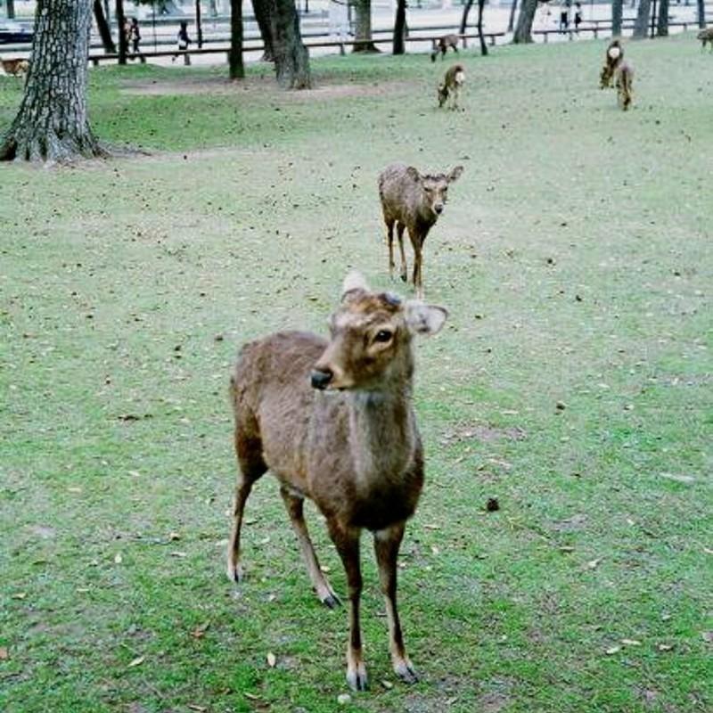 鹿さん(笑