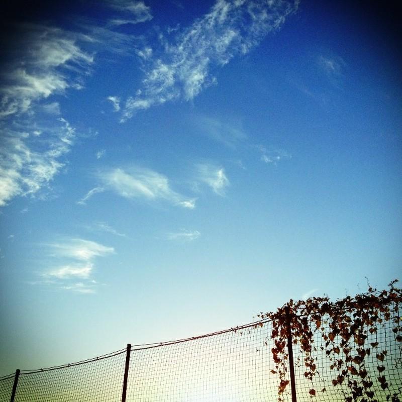 秋風に 思わず空を 仰ぎ見る