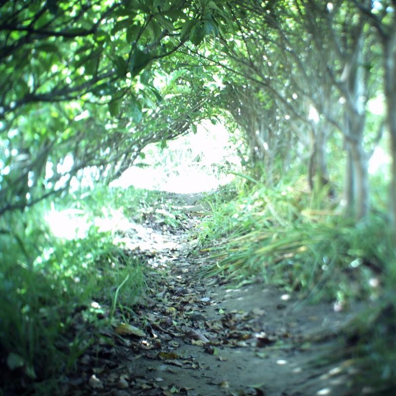 トトロに続く小道