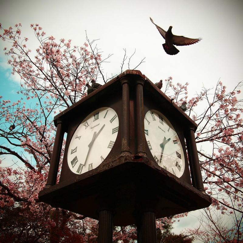 ハトと時計『春』