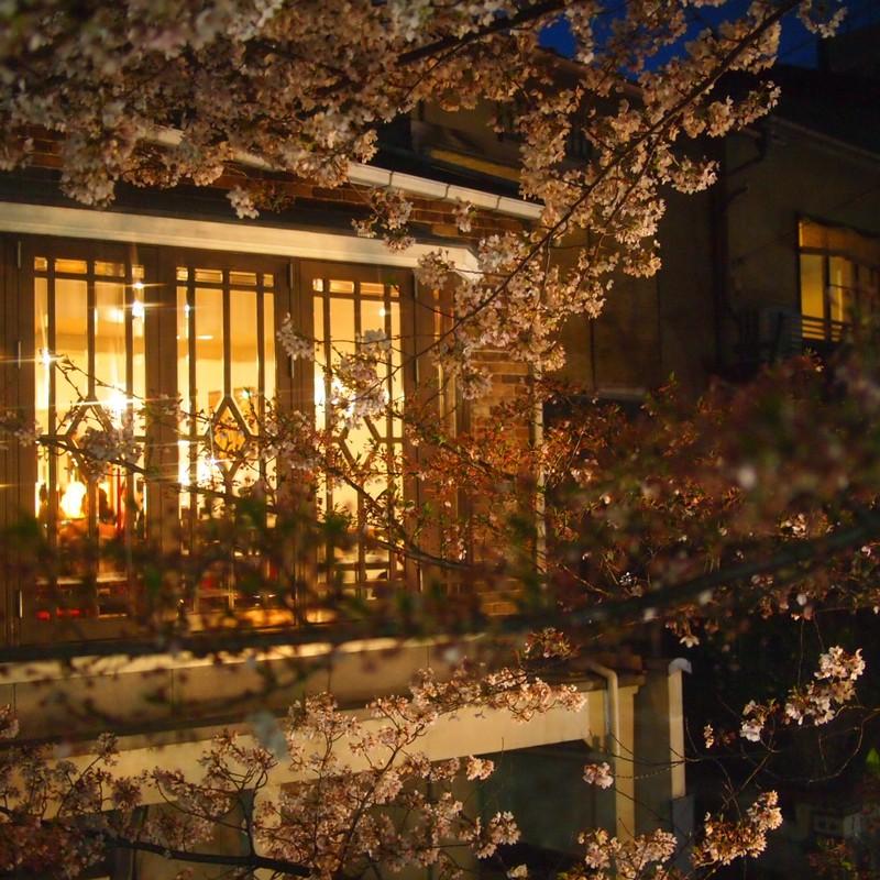 京の夜 「桜」