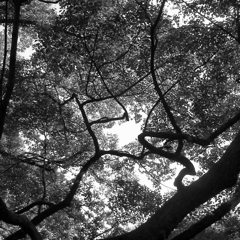迷える森で。