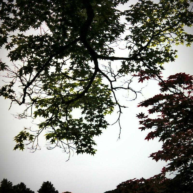 気まぐれカメラの秋。