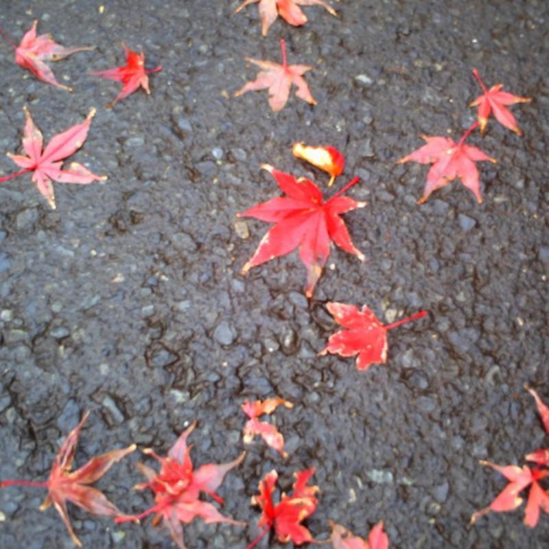 秋の雨降り