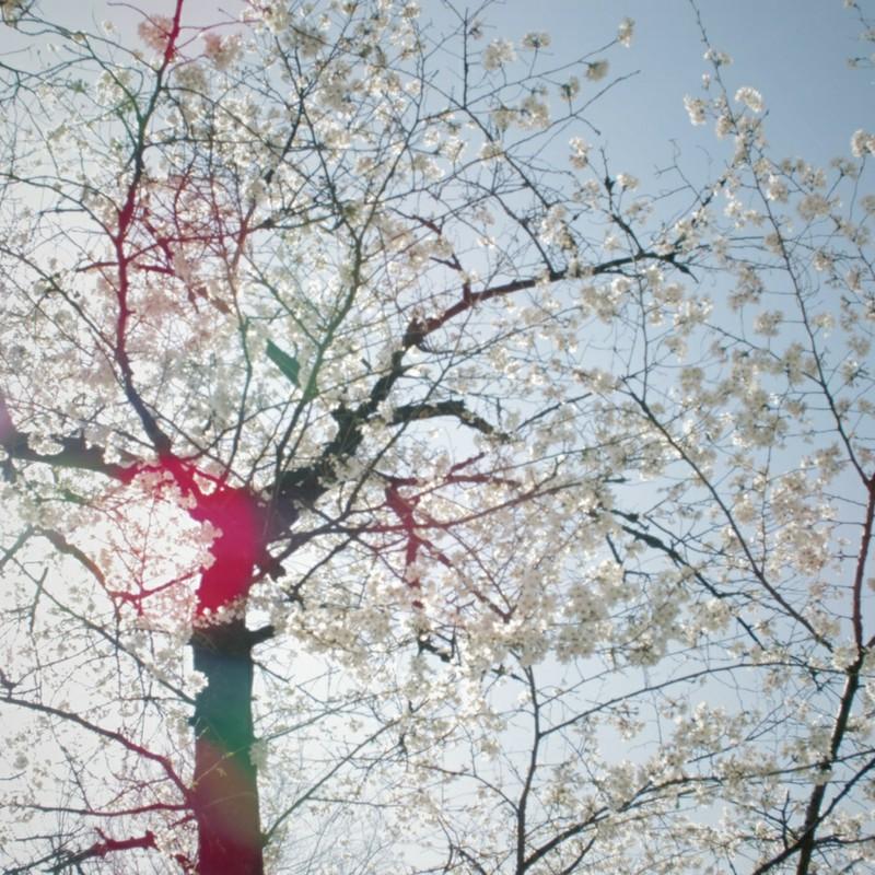 春の日差し 1