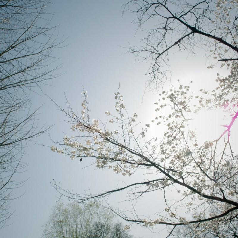 春の日差し 2