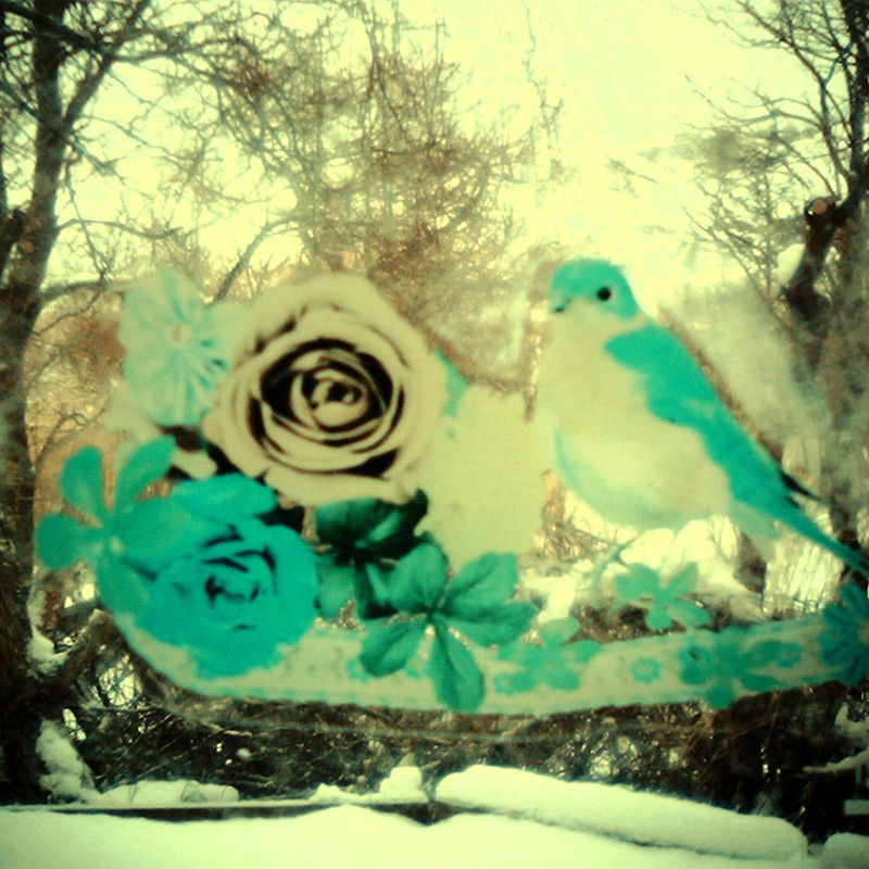 森に住む青い鳥