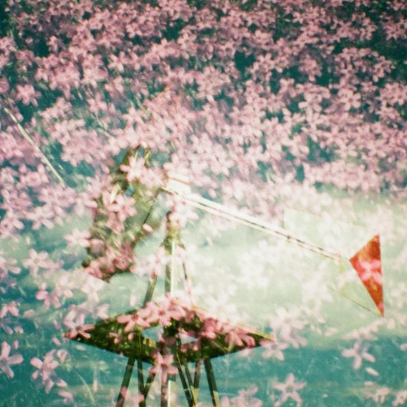 花と風と青空と