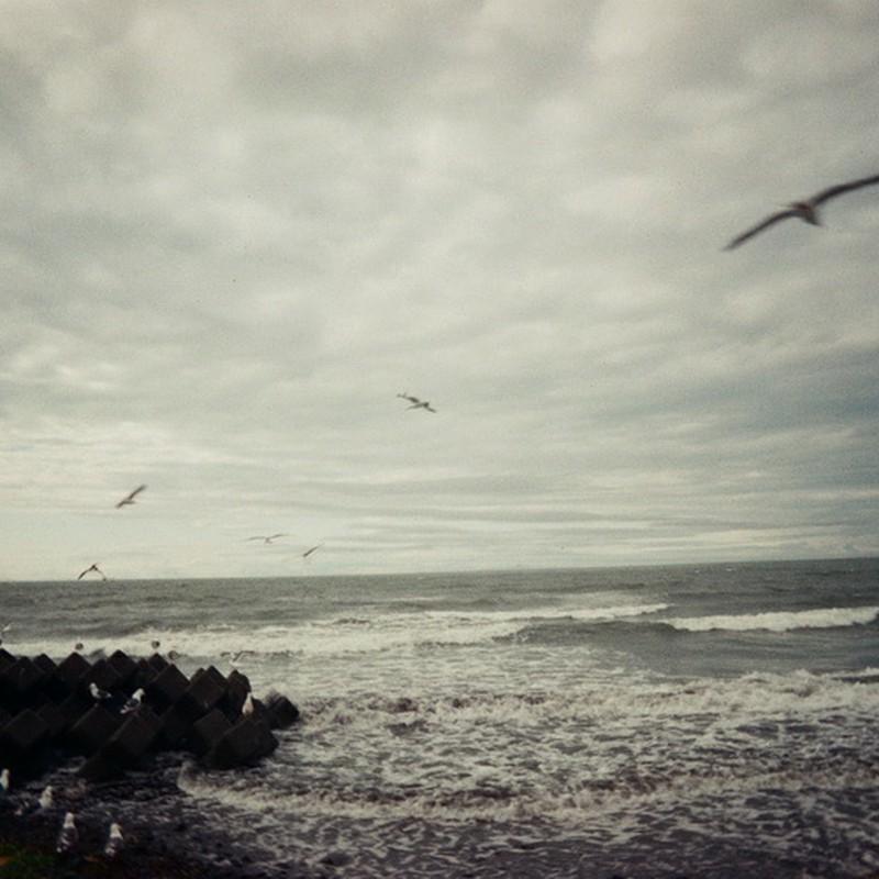 極寒の海で鴎は舞う