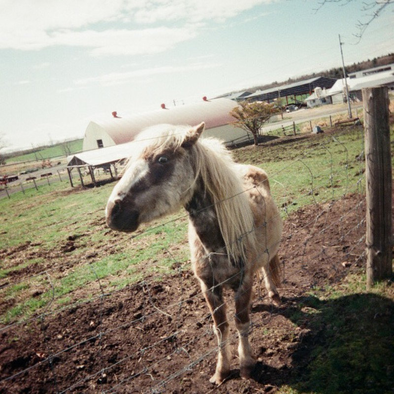 Cute horse♪