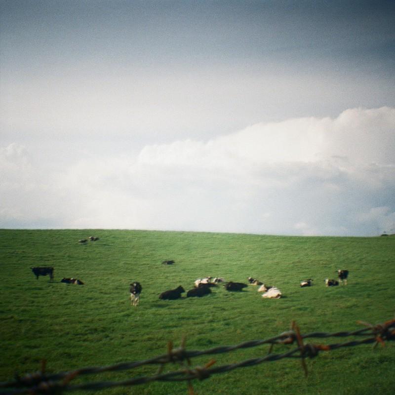 寝っころ牛さん