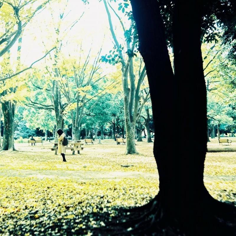 木陰に潜んでかくれんぼ