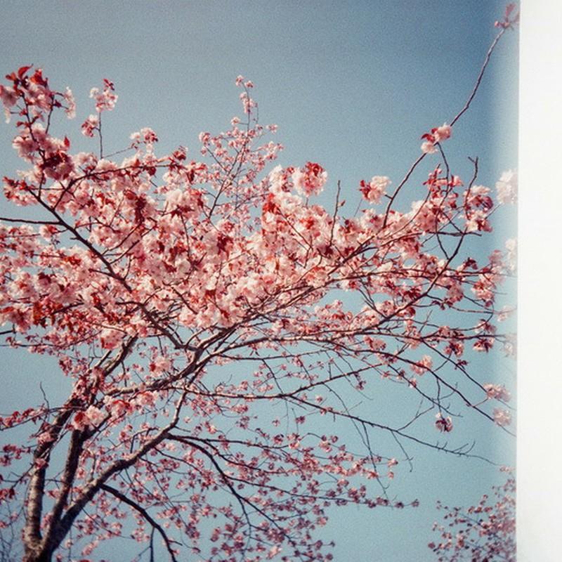 桜に托して