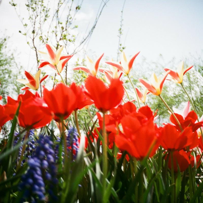 花々の深呼吸