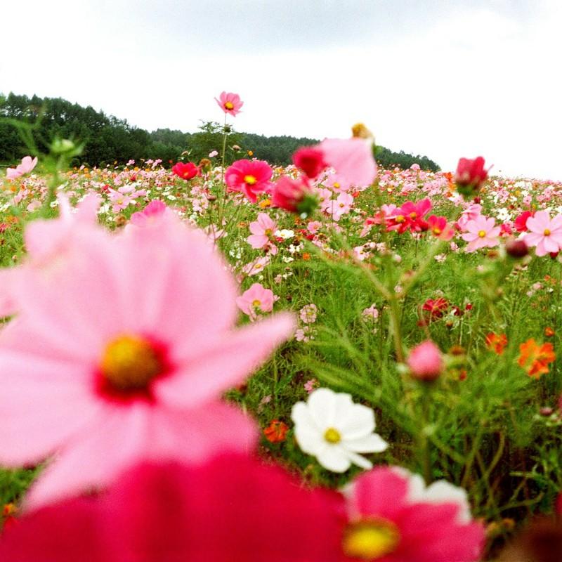 散らばる宇宙の花畑