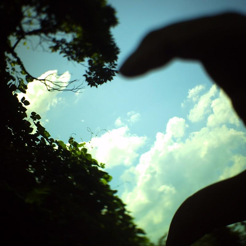 樹と手で空のハート。