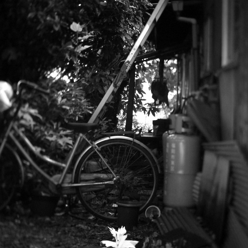 路地日向に咲く