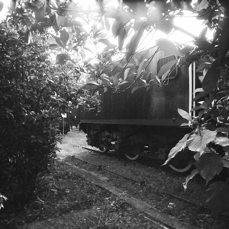 隠れる列車
