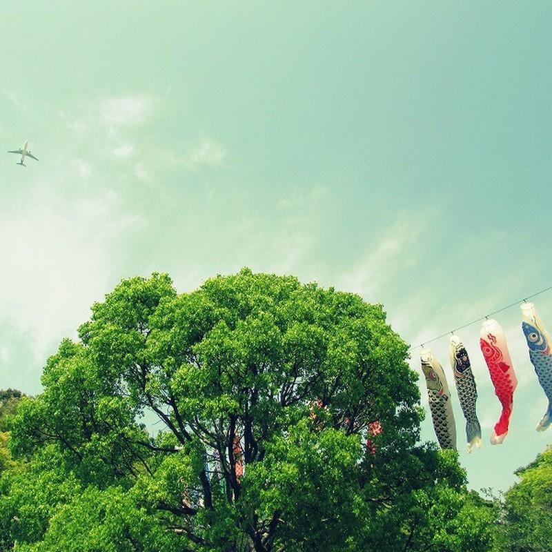 空高く 希望に満ちて 良き日かな