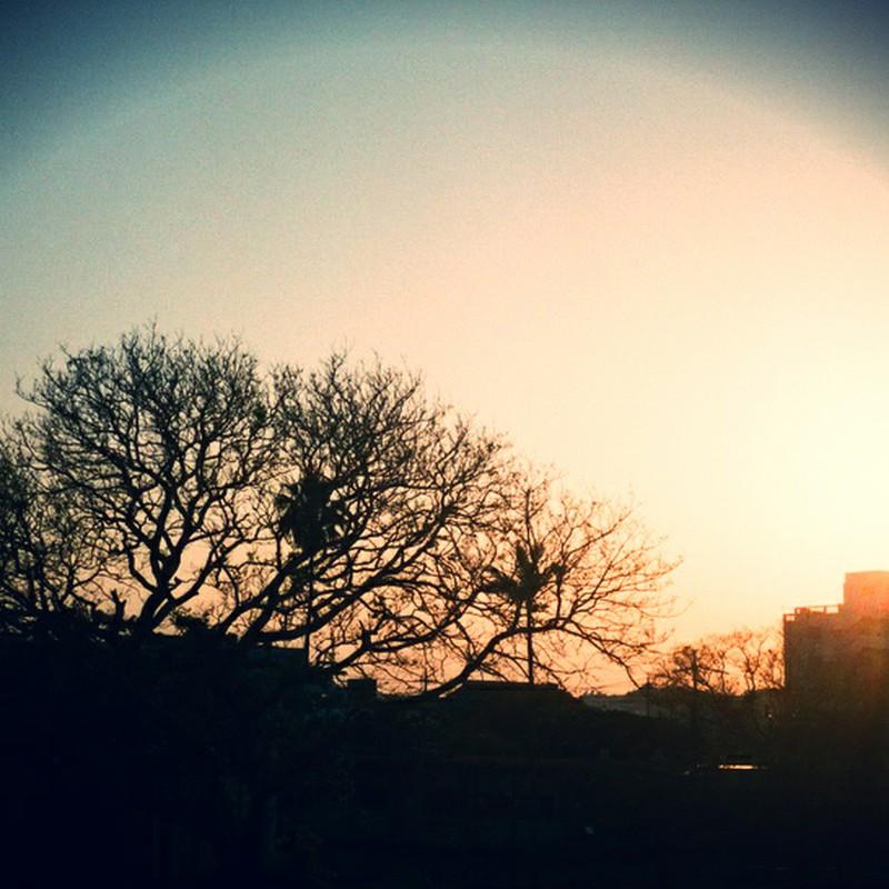 夕やけと木