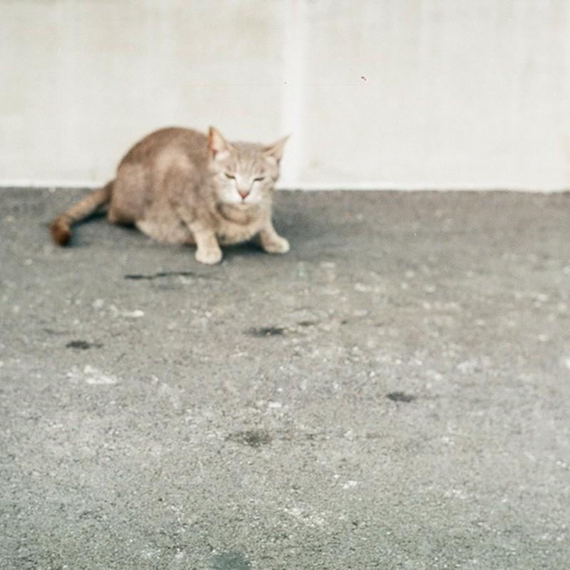 ファミマで会ったママ猫。