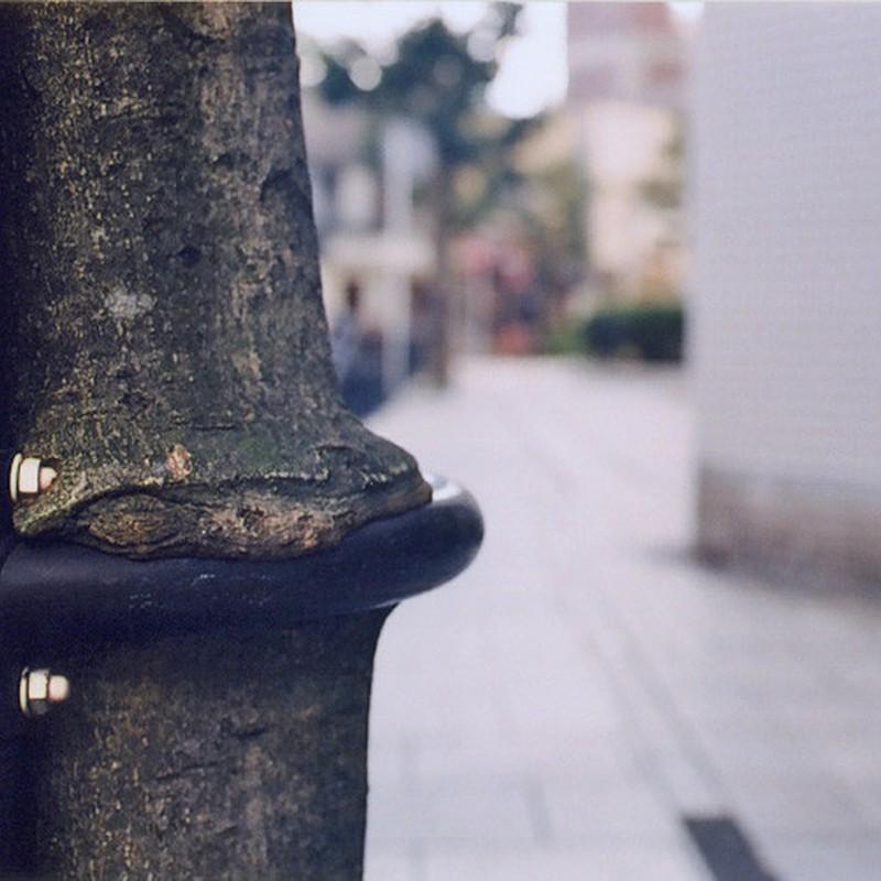 食べちゃう木