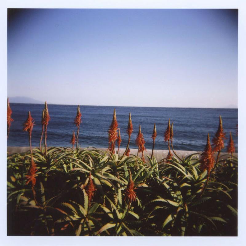 海を見ているアロエ