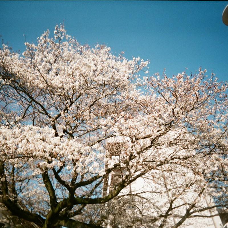 ~桜舞う季節へ~