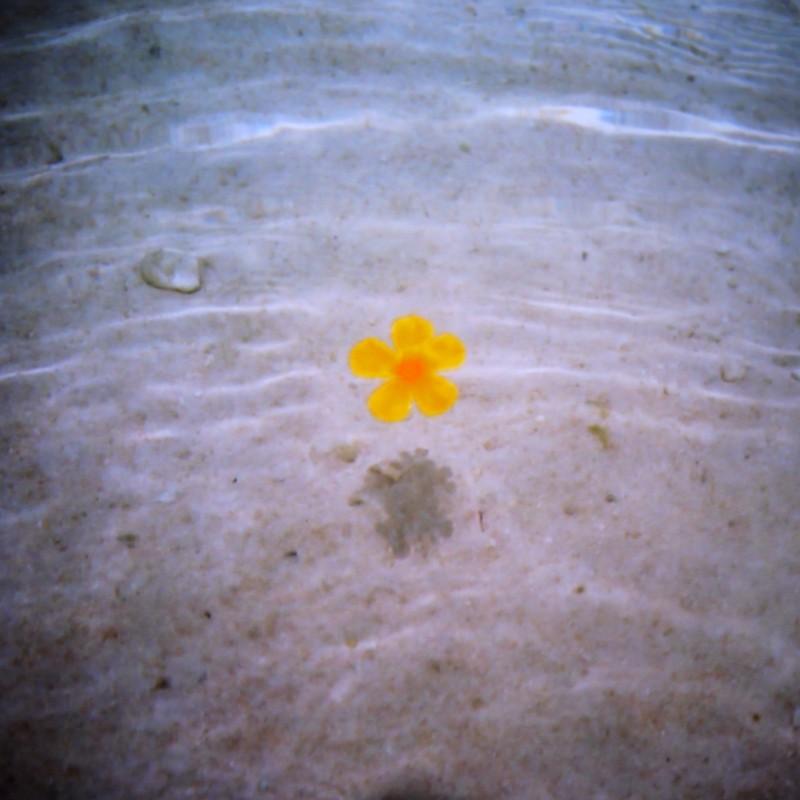 地球に咲く花